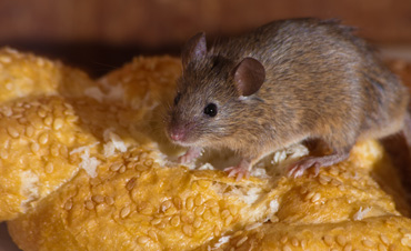 mouse control removal berk chester delaware montgomery pennsylvania
