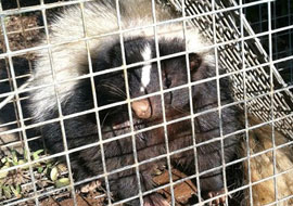 wildlife removal pennsylvania